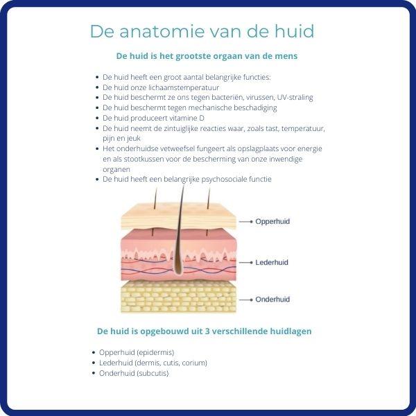 Poster de anatomie van de huid