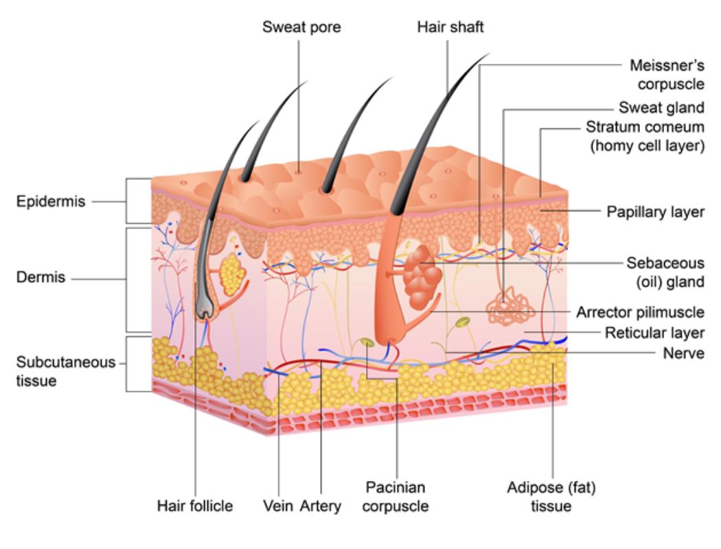 Psoriasis voor OnlDerm (1)